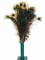Vee Enterprises Natural Peacock Feathers