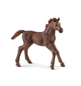 SCHLEICH ENG-THOROUGH-F