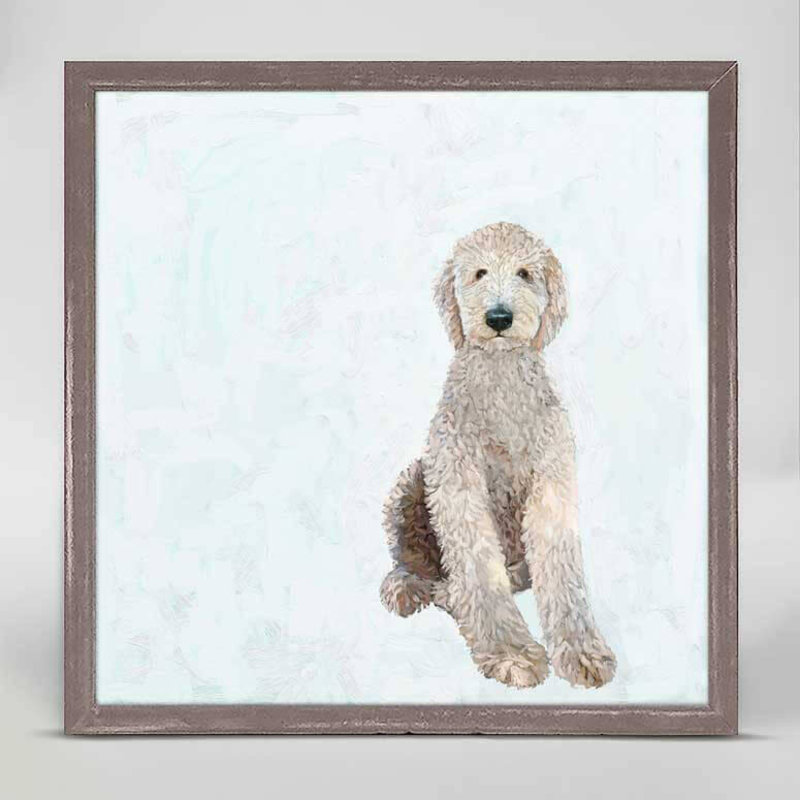 Best Fred - All Legs Labradoodle mini