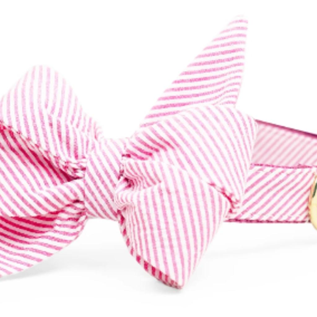 Fuchsia Seersucker belle bow collar LARGE