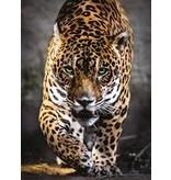 CREATIVE TOY Walk of the Jaguar, 1000 pc puzzle