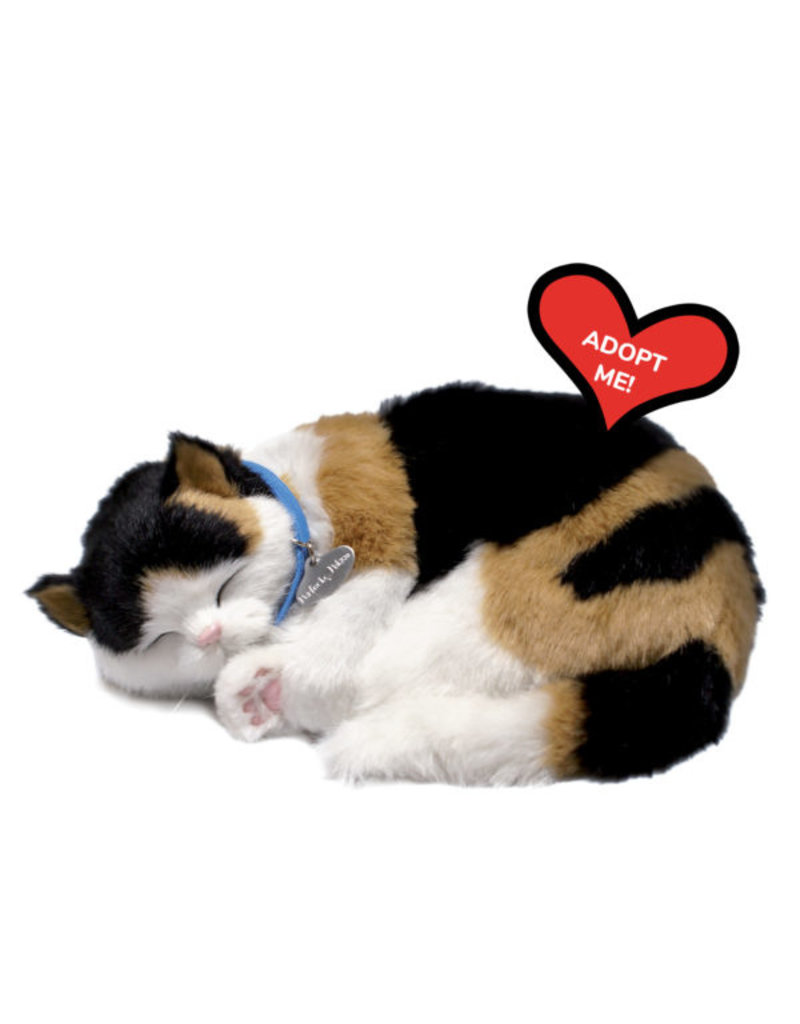 88 UNLIMITED CALICO CAT
