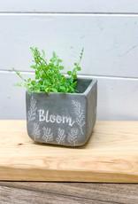 Bloom Cement Planter