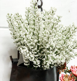 Bursting Astilbe | White | 10.5""
