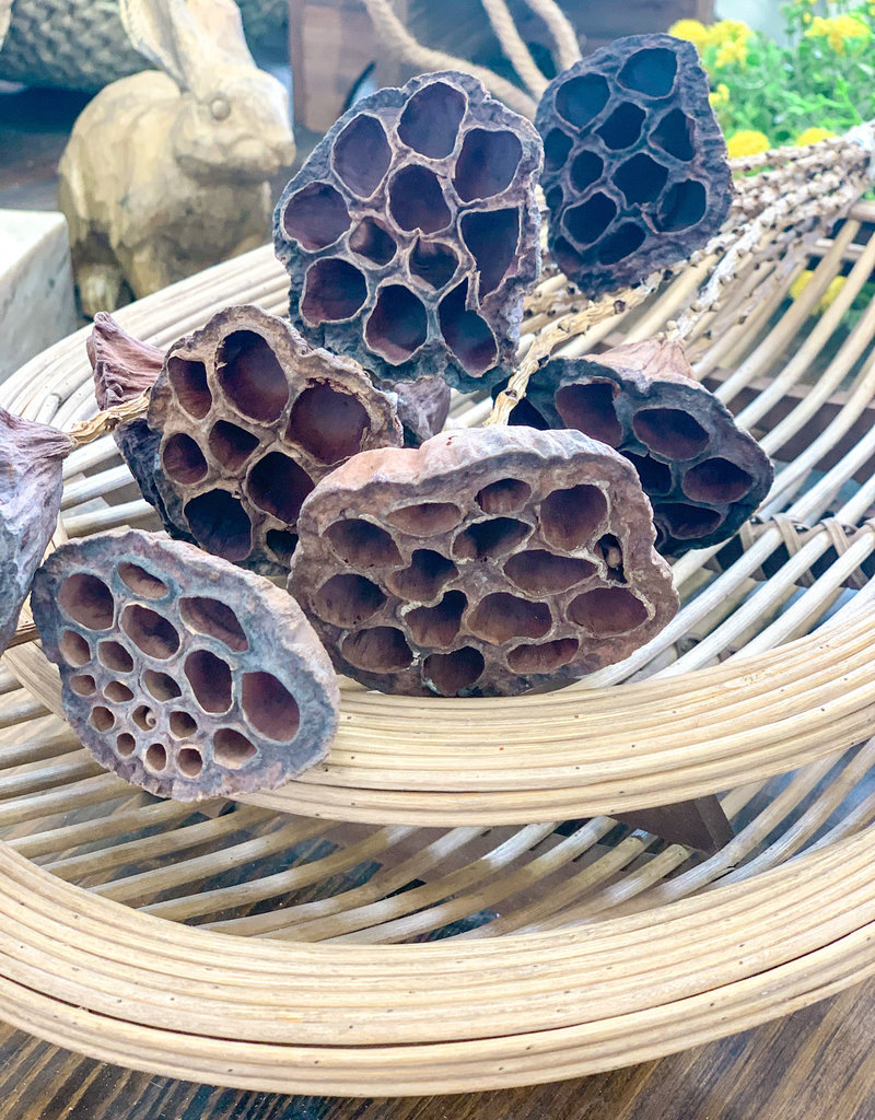 Dried Lotus Pods