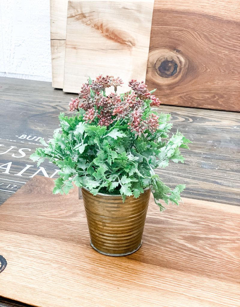 Pink Seeded Plant in Pot