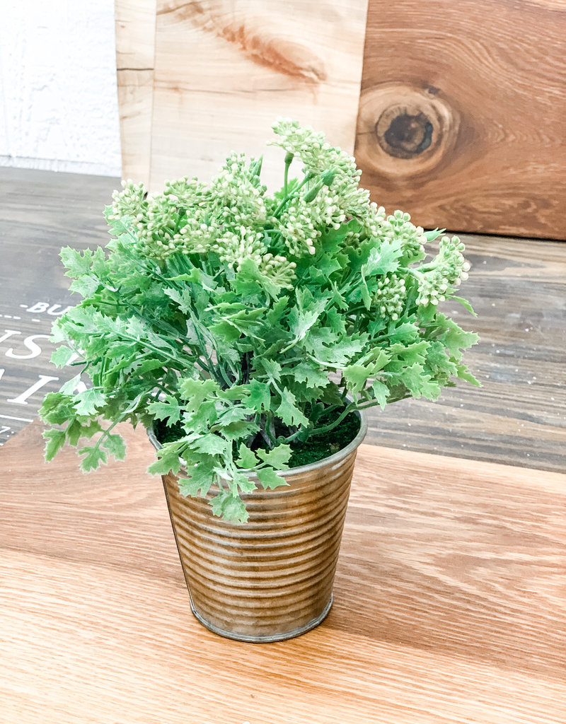 Yellow Seeded Plant in Pot