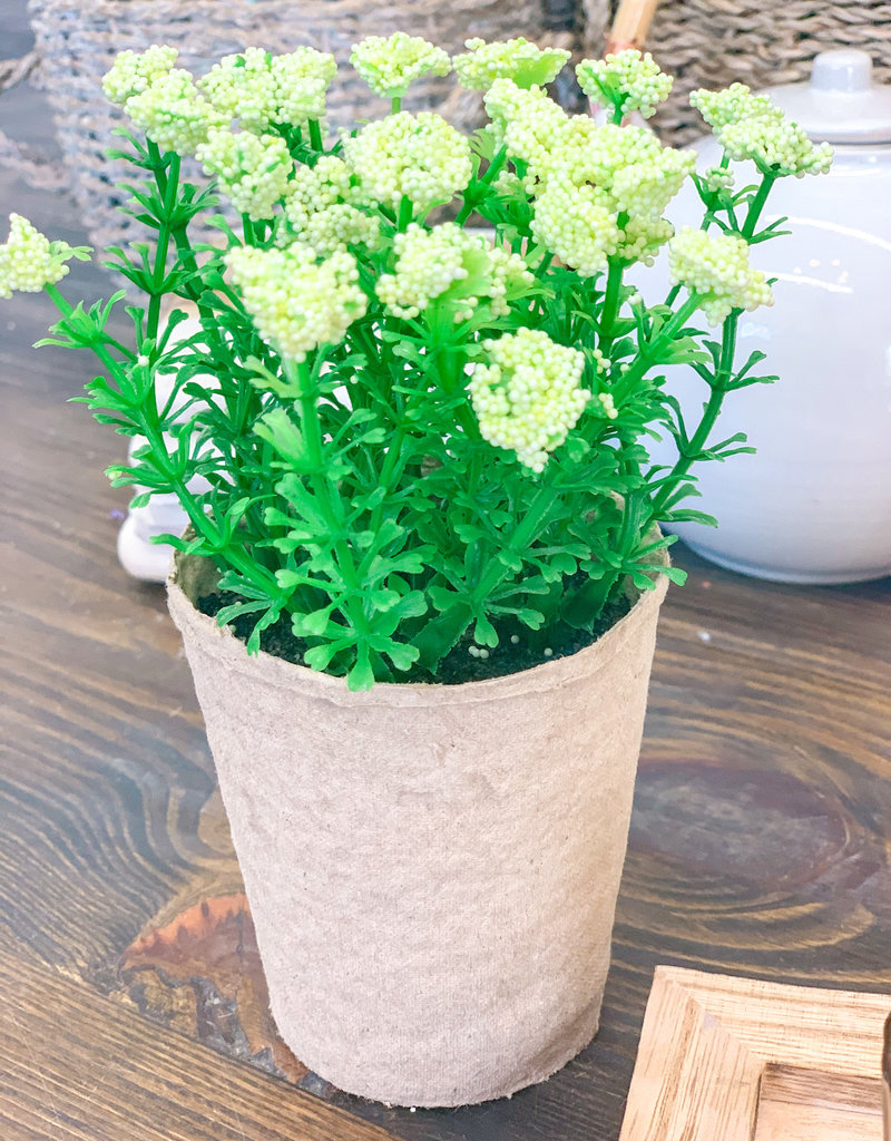 Blooming Plant in Paper Pot   Cream
