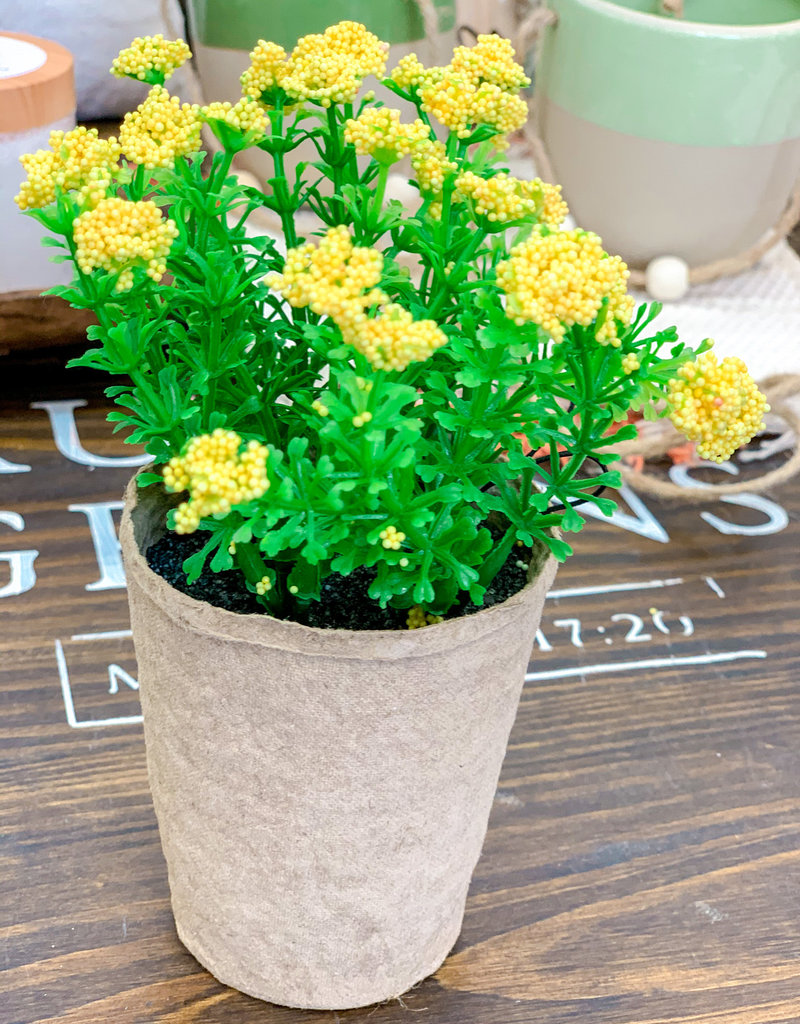 Blooming Plant in Paper Pot | Yellow