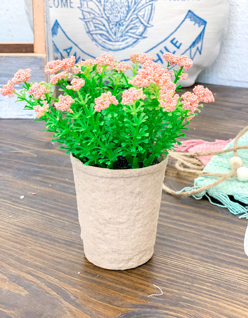 Blooming Plant in Paper Pot | Pink