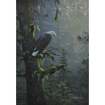 Mark Hobson art card bald eagle mark hobson P-2938
