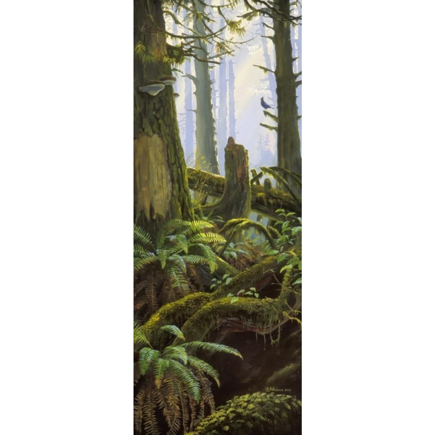 Mark Hobson Art Card Steller's Jay In Rainforest