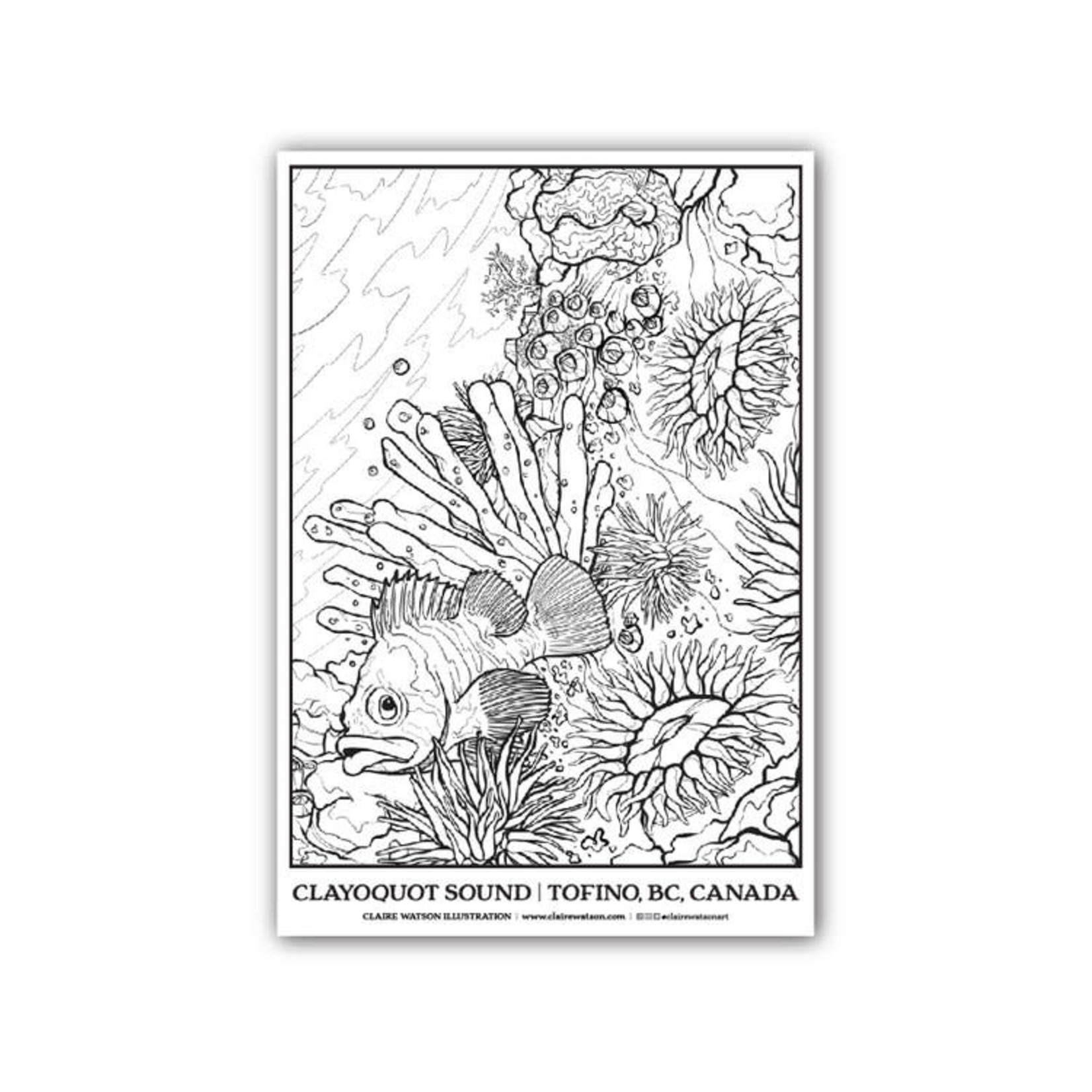 Claire Watson Rockfish Coloring Poster