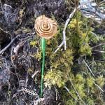 Elizabeth George Cedar Rose Large