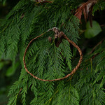 Elizabeth George necklace woven cedar