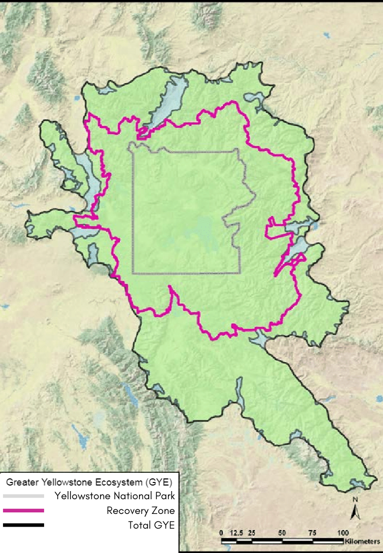 Greater Yellowstone ecosystem amp