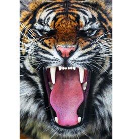 """SF1390 Roaring Tiger 60"""" x 40"""""""
