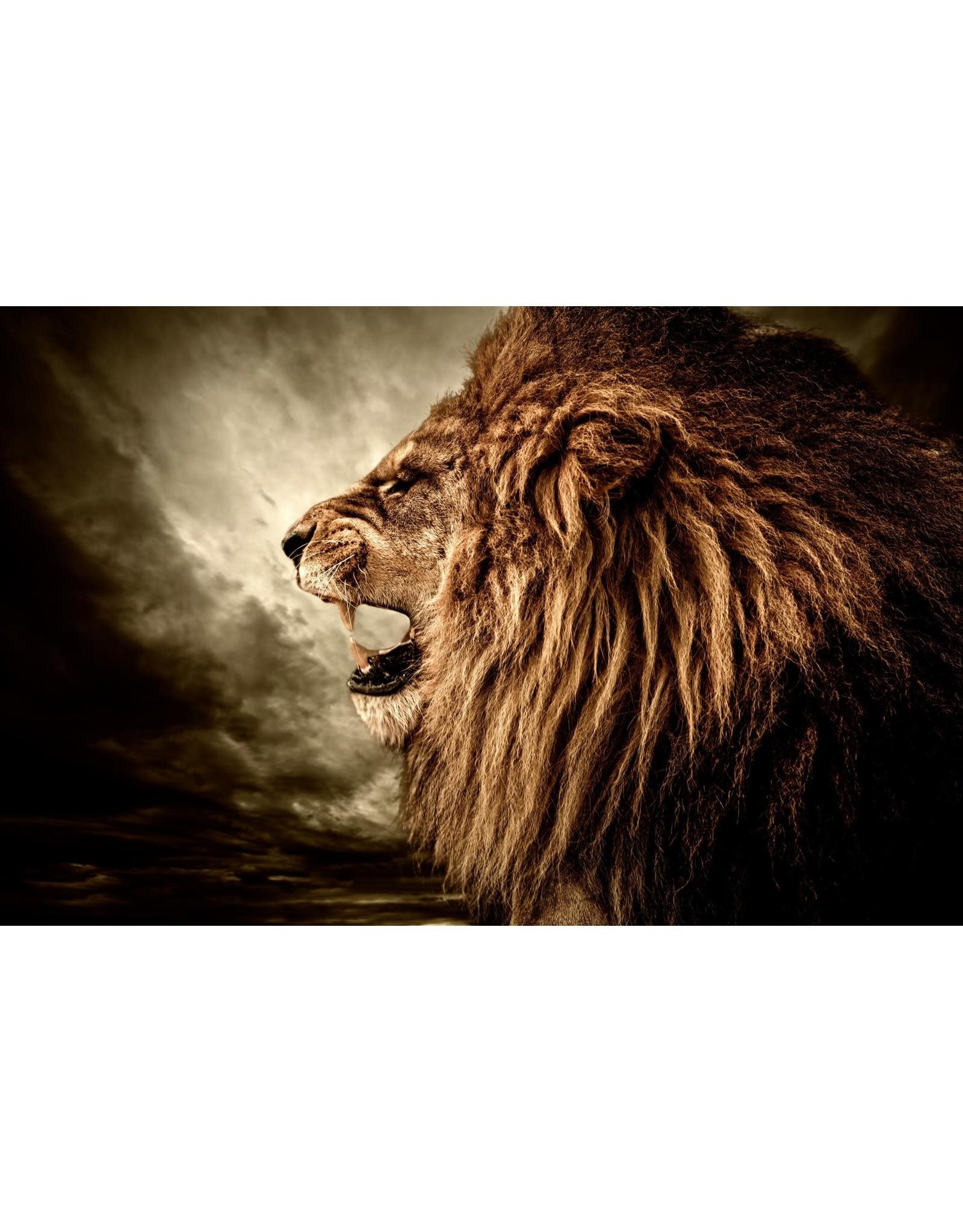 "SF1355 Lion Side 60"" x 40"""