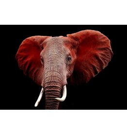 "SF1331 Red Elephant 60"" x 40"""