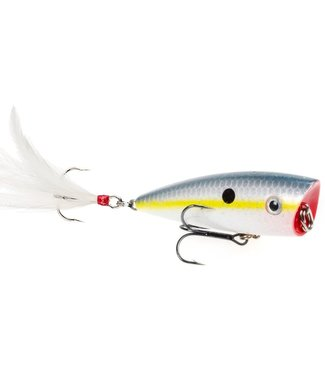 Strike King Strike King HC KVD Splash Popper