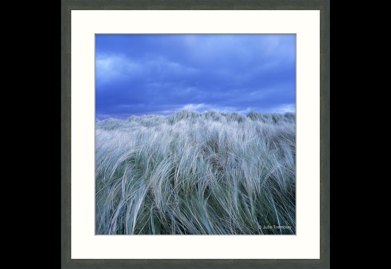 Ireland Grass