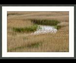 Grass Pattern