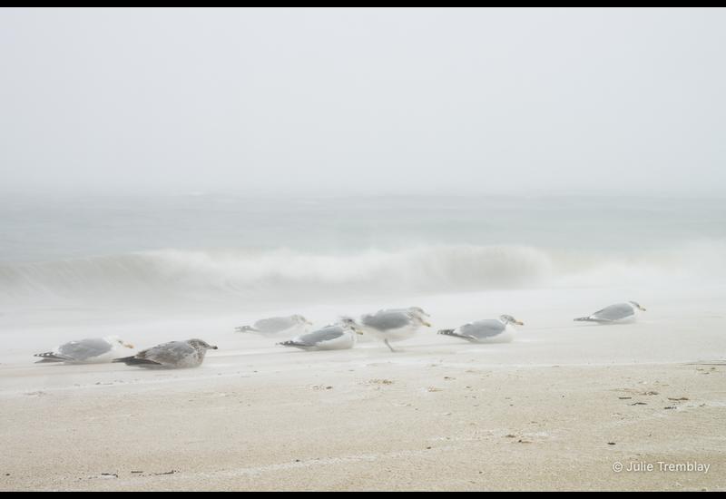 Sea Gulls Storm