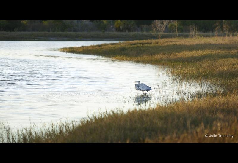 Heron Water