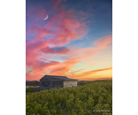 Watson Sunset