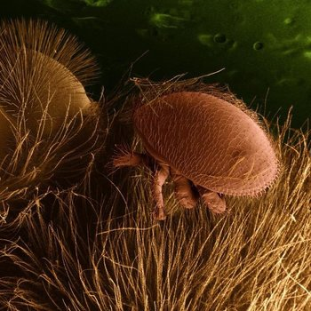 Varroa Mites Online Varroa Mite Management Class -Wed April 1st