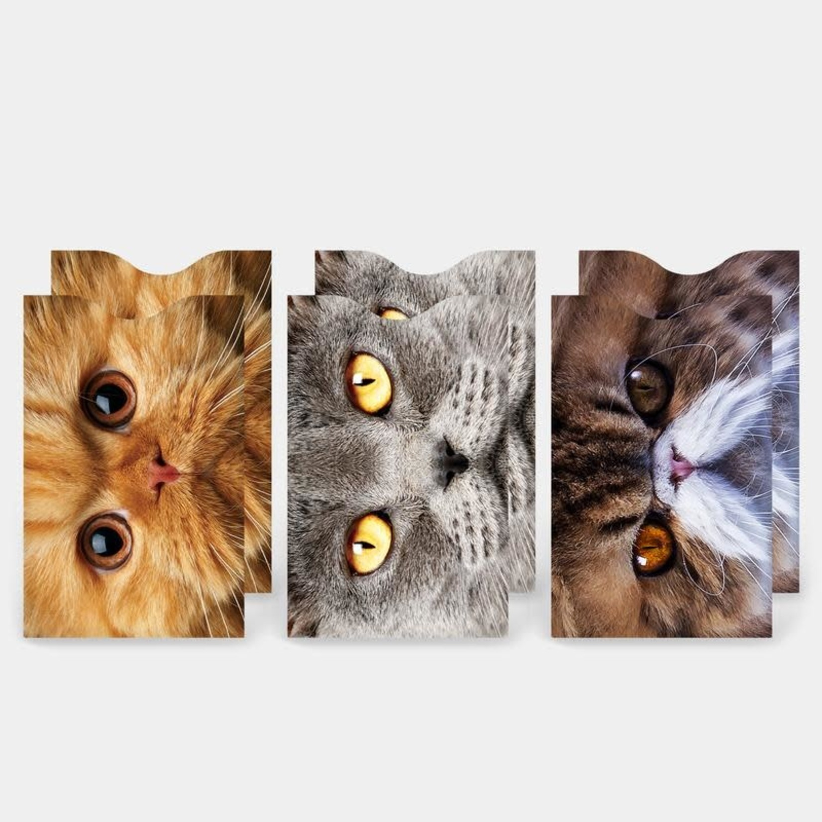 Monarque Set of 6 - Cats Credit Card Sleeves