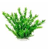 Aquatop ANACHARIS 12IN GREEN