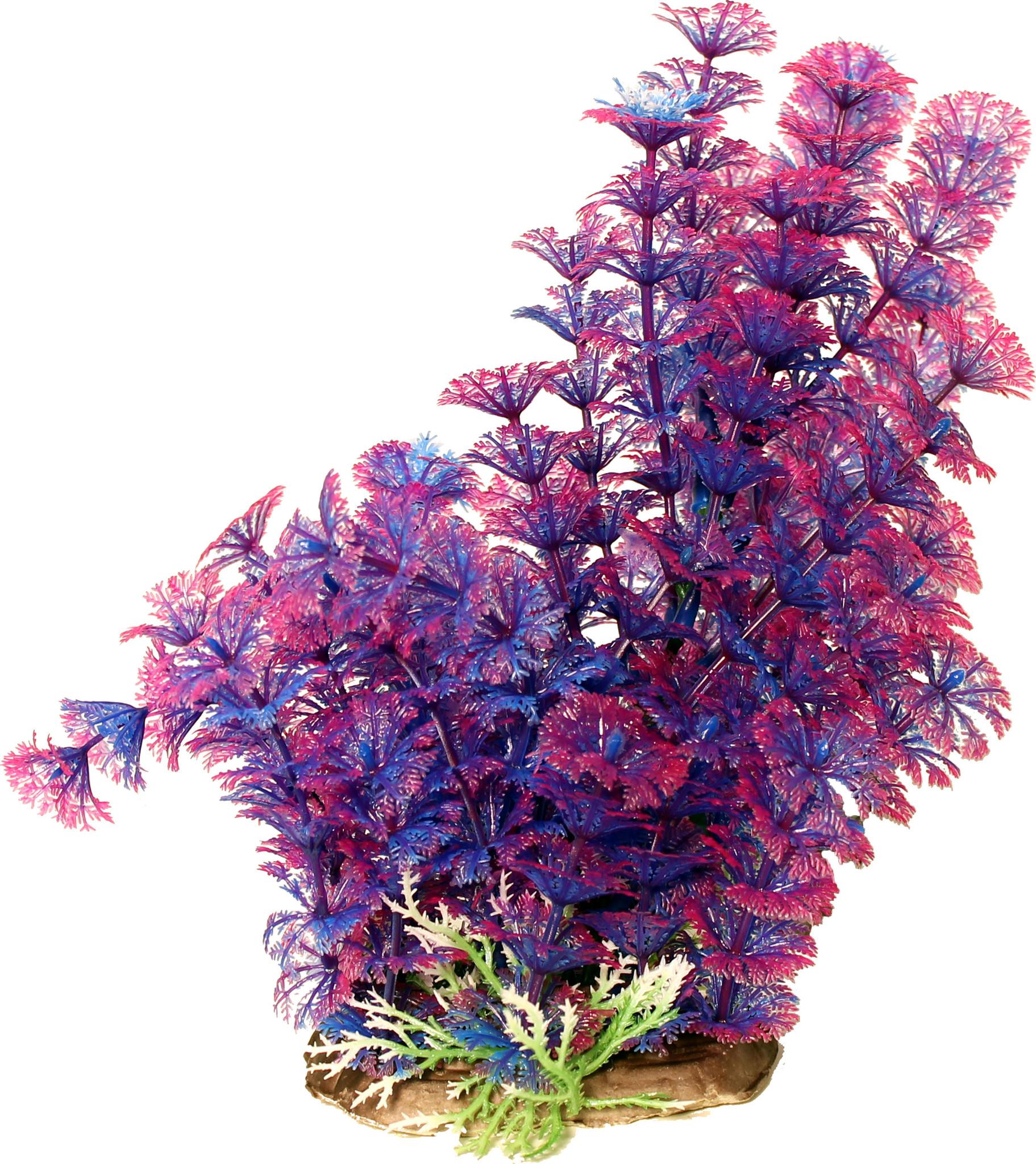 "Poppy Pet Ambuila Purple 12"""