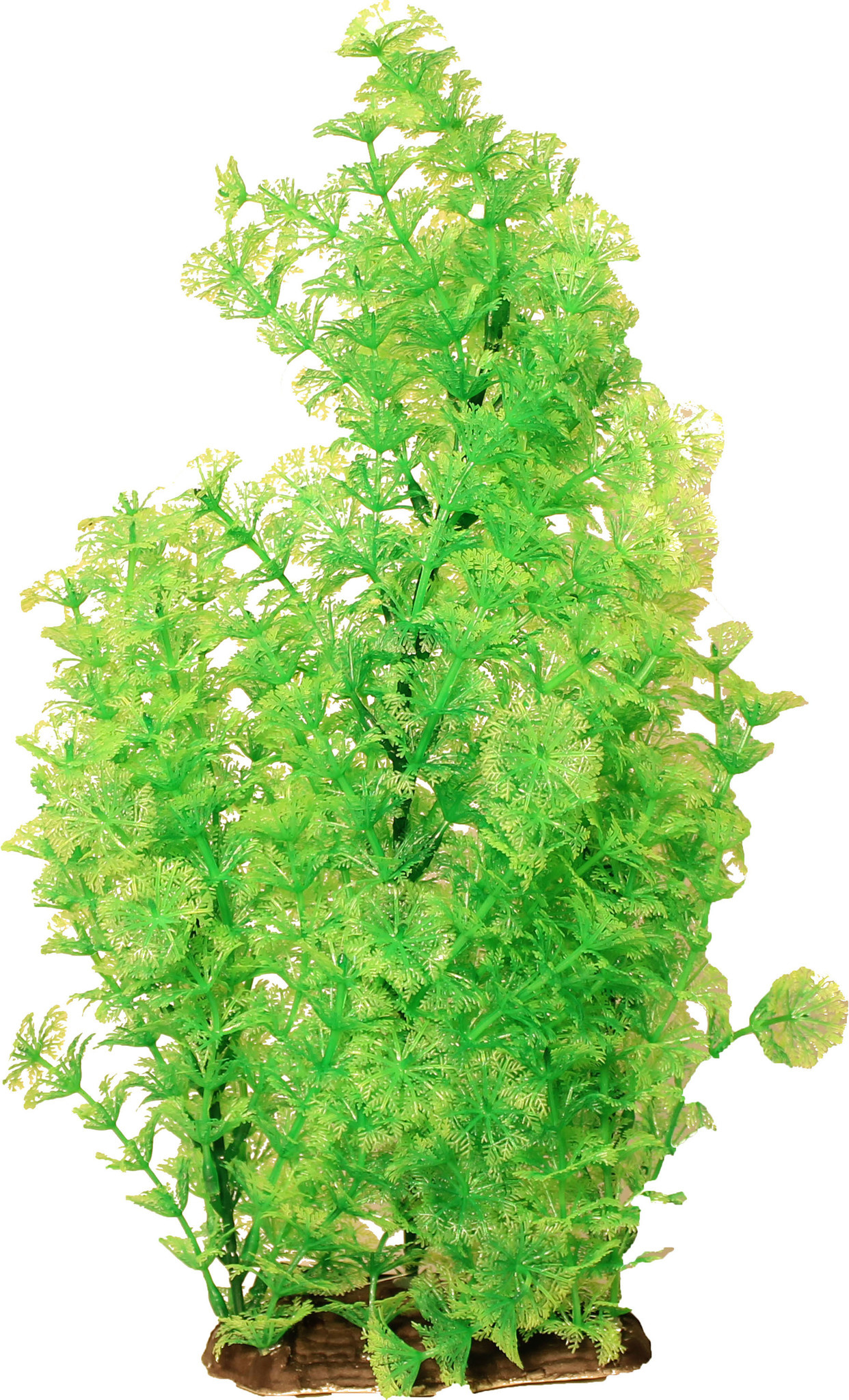 "Poppy Pet Ambulia Dark Green 16"""