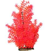 "Poppy Pet Ambulia Red 16"""