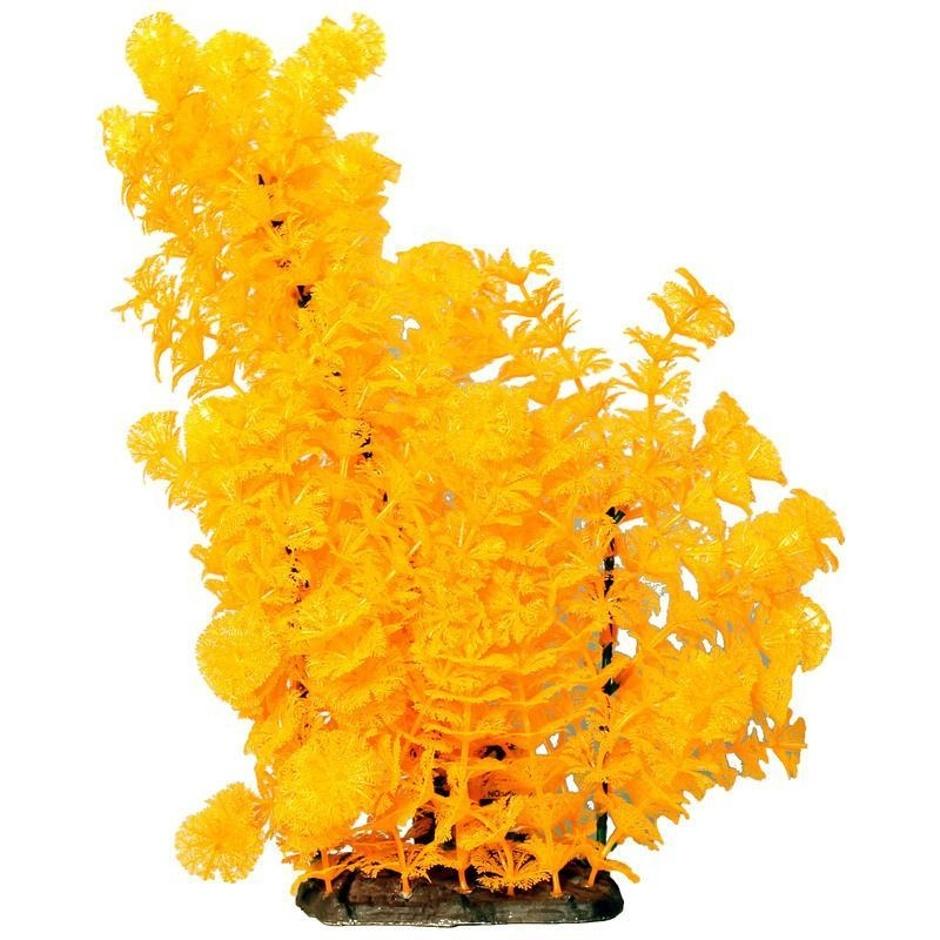 Poppy Pet Bushy Ambuila Orange
