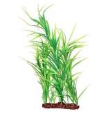 "Poppy Pet Freestanding Plant 24"" green"