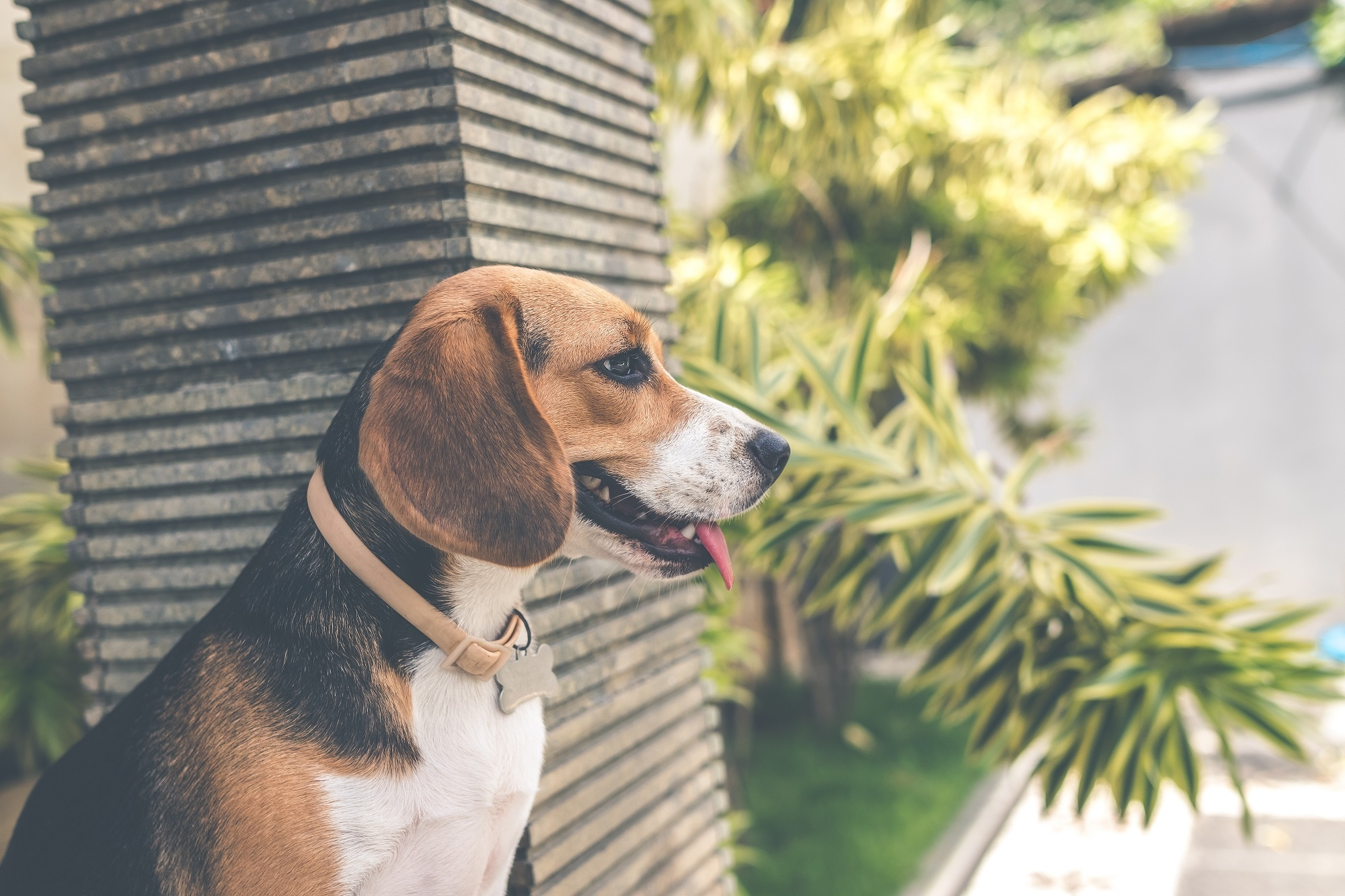Doggy Danger: Beware of these Holiday Plants