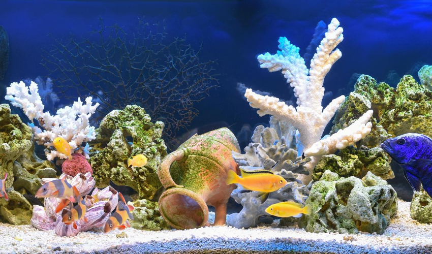 How to Choose the Right Aquarium Heater for Every Tank