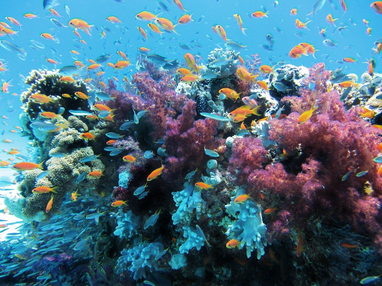 What Do Aquarium Corals Need to Survive and Thrive?