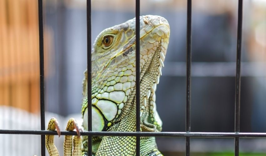 How to Choose the Right Materials for Your Reptile Cage