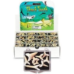 Box of Shark Teeth