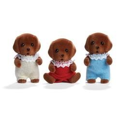 Chocolate Labrador Triplets