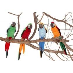 """Parrots 7"""" Assortment"""
