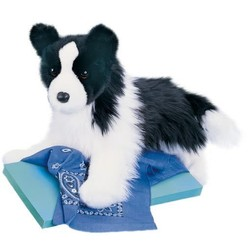 Chase - Border Collie 16""