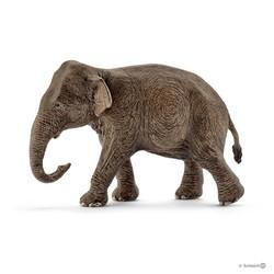 Asian Elephant, Male