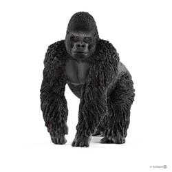 Gorilla, Male