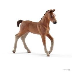 Hanoverian Foal