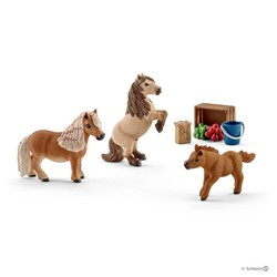 Miniature Shetland Pony Family
