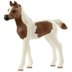 Pintabian Foal